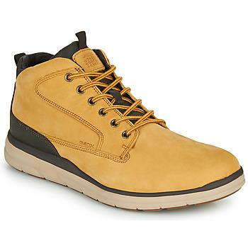 Shoes Men High top trainers Geox U HALLSON Brown
