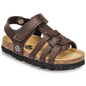 Shoes Boy Sandals Citrouille et Compagnie JANISOL Brown / Dark