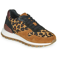 Shoes Women Low top trainers JB Martin HABILLE Brown